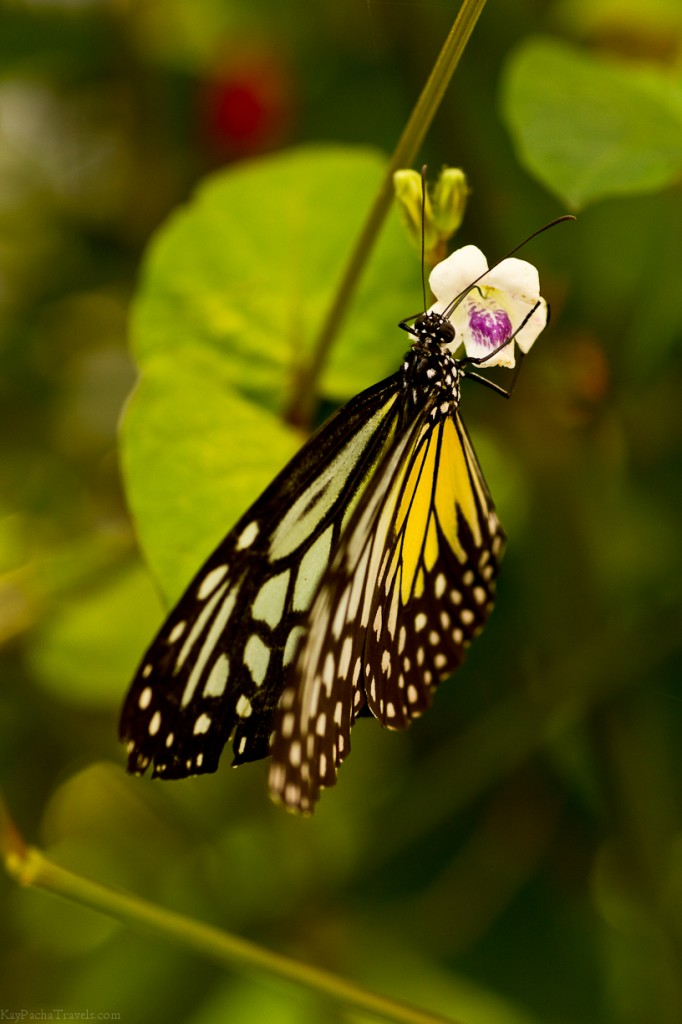 A photo story: Butterfly & Insect Farm, Malaysia