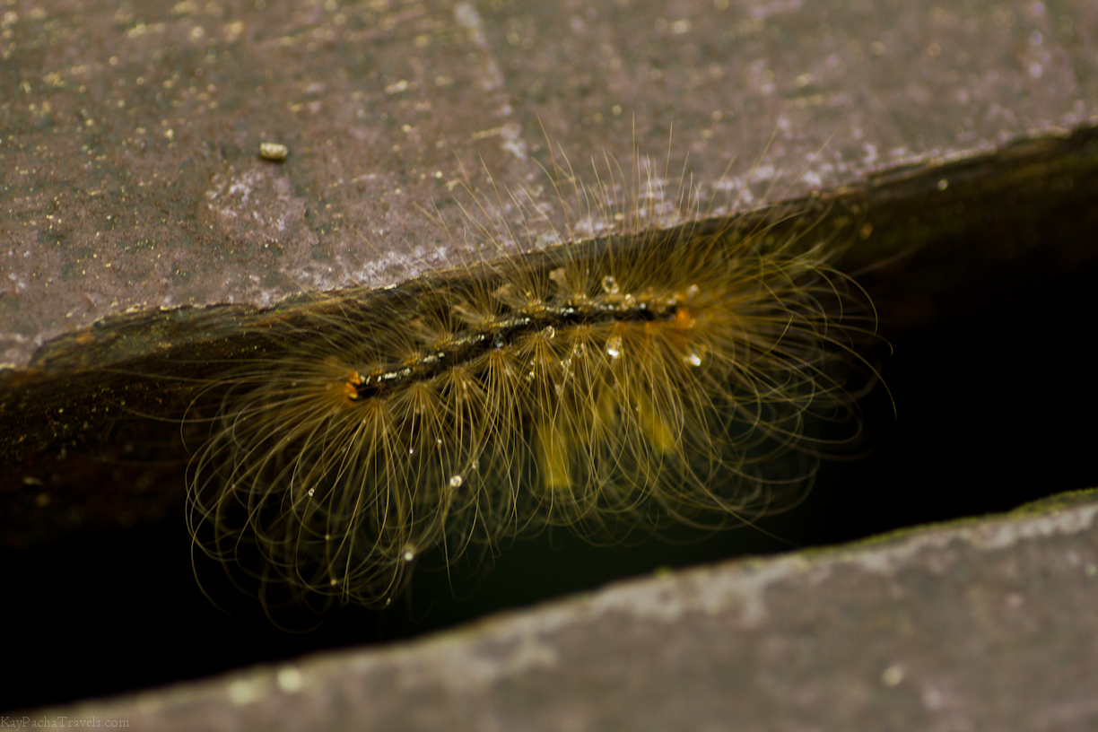 Friday Snapshot: Caterpillar in Borneo