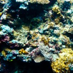 Friday Snapshot: Colorful coral in Sipadan
